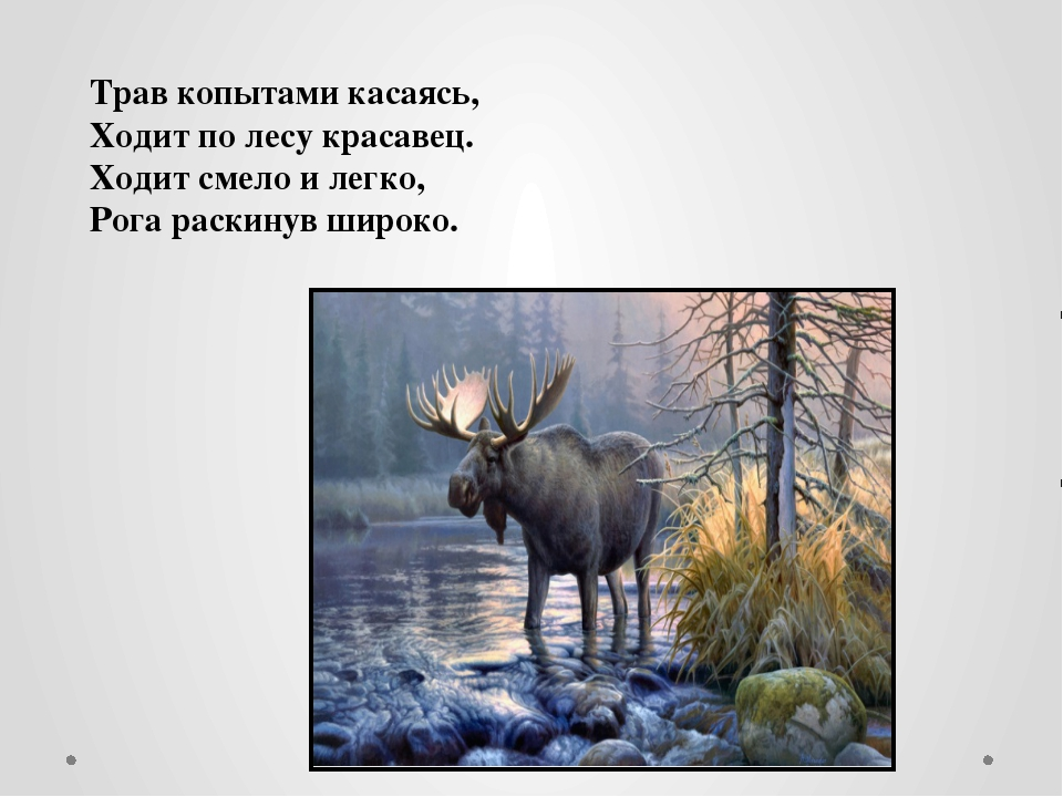Трав копытами касаясь, Ходит по лесу красавец. Ходит смело и легко, Рога ра...