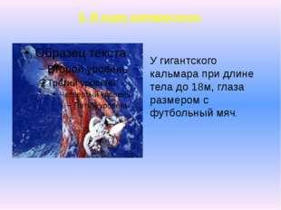5. В мире интересного. У гигантского кальмара при длине тела до 18м, глаза ра