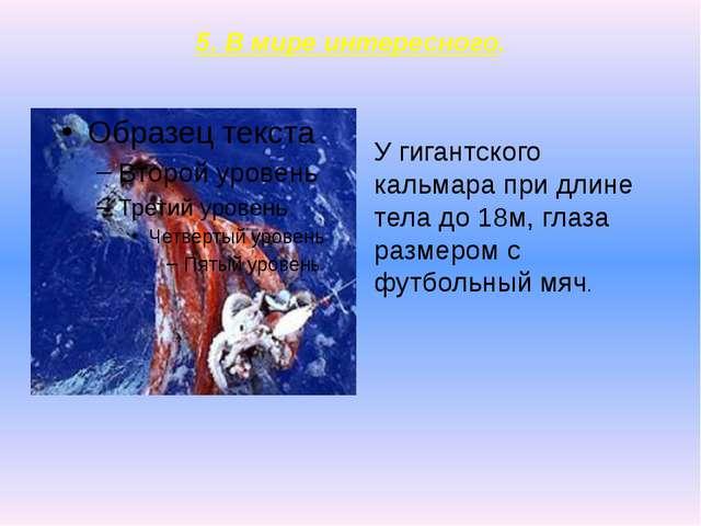 5. В мире интересного. У гигантского кальмара при длине тела до 18м, глаза ра...