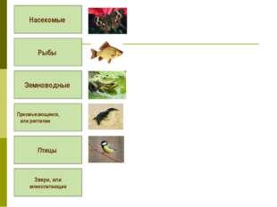 Насекомые Рыбы Земноводные Пресмыкающиеся, или рептилии Птицы Звери, или мле