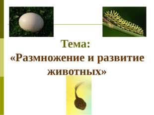 Тема: «Размножение и развитие животных»