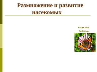 Размножение и развитие насекомых взрослая бабочка