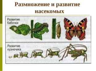 Размножение и развитие насекомых
