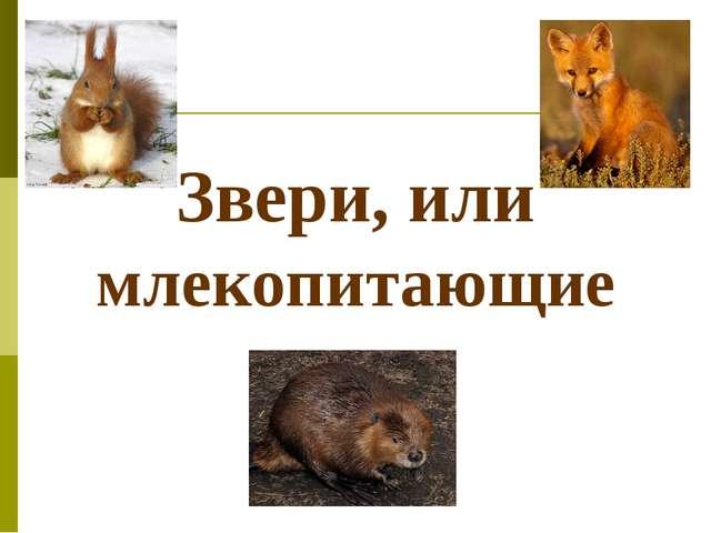 Звери, или млекопитающие