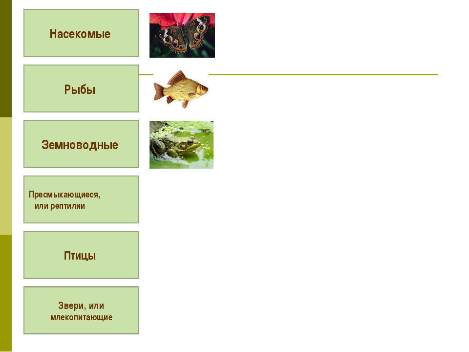 Насекомые Рыбы Земноводные Пресмыкающиеся, или рептилии Птицы Звери, или мле...