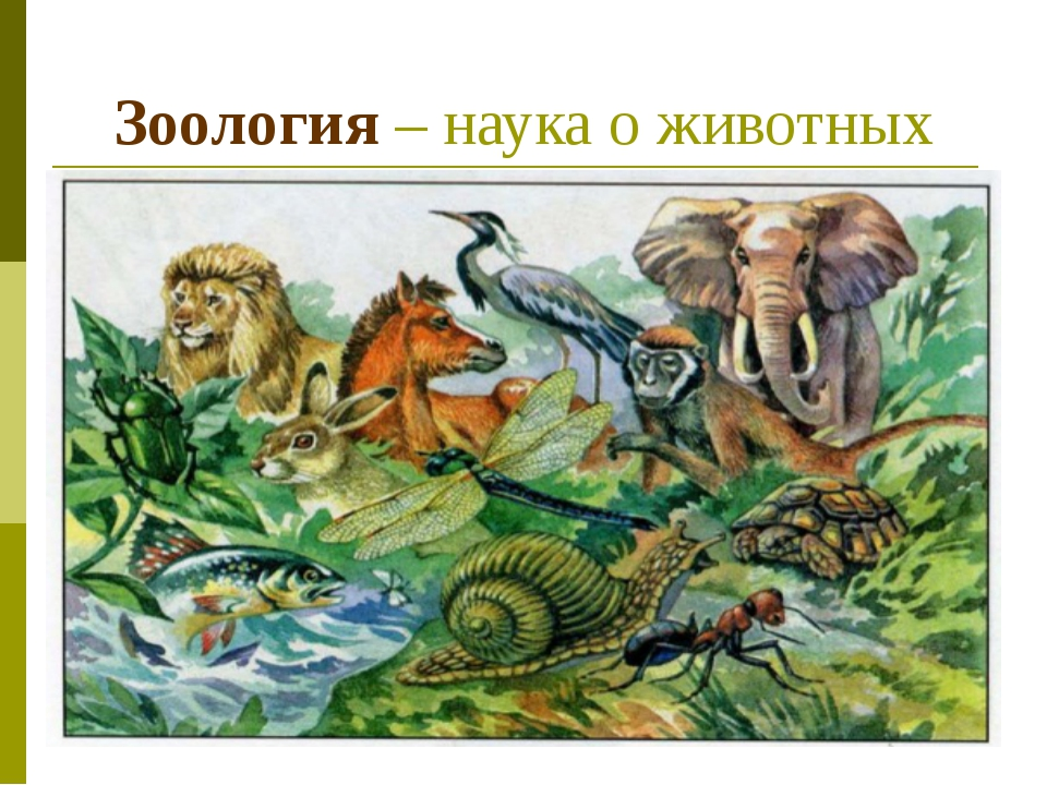 Зоология картинки животных