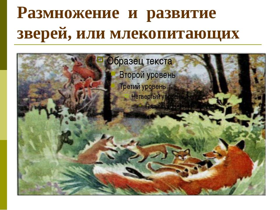 Размножение и развитие зверей, или млекопитающих
