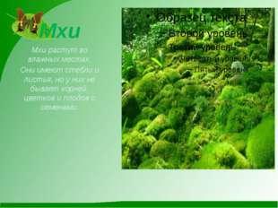 Мхи Мхи растут во влажных местах. Они имеют стебли и листья, но у них не быва