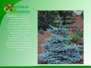 Хвойные растения Хво́йные— один из 13—14отделов царства растений к котором