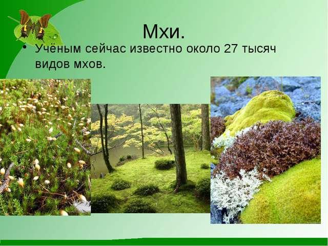 Мхи. Учёным сейчас известно около 27 тысяч видов мхов.