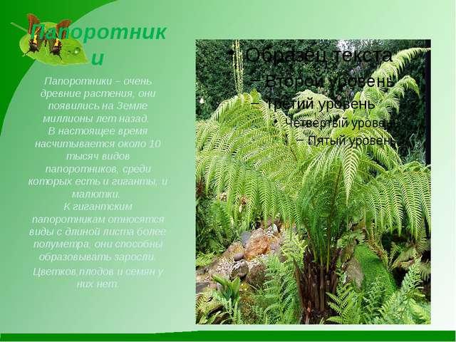 Папоротники Папоротники – очень древние растения, они появились на Земле милл...