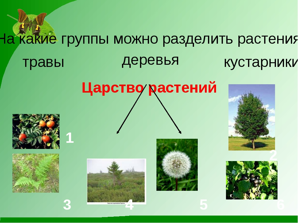 Царство растений На какие группы можно разделить растения? травы кустарники д...