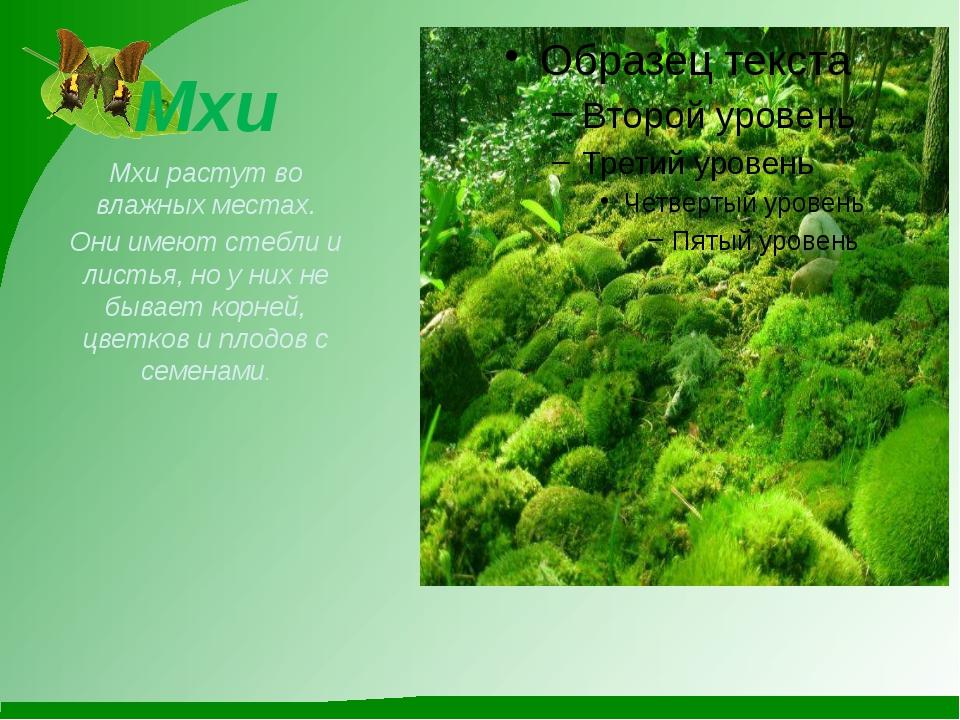 Мхи Мхи растут во влажных местах. Они имеют стебли и листья, но у них не быва...