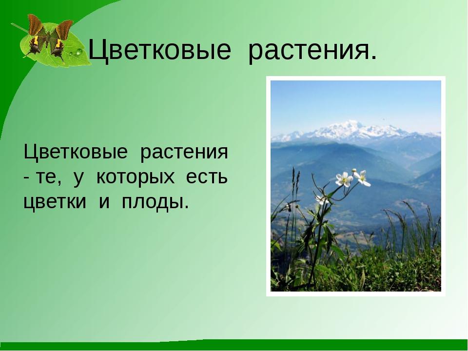 Цветковые растения. Цветковые растения - те, у которых есть цветки и плоды.