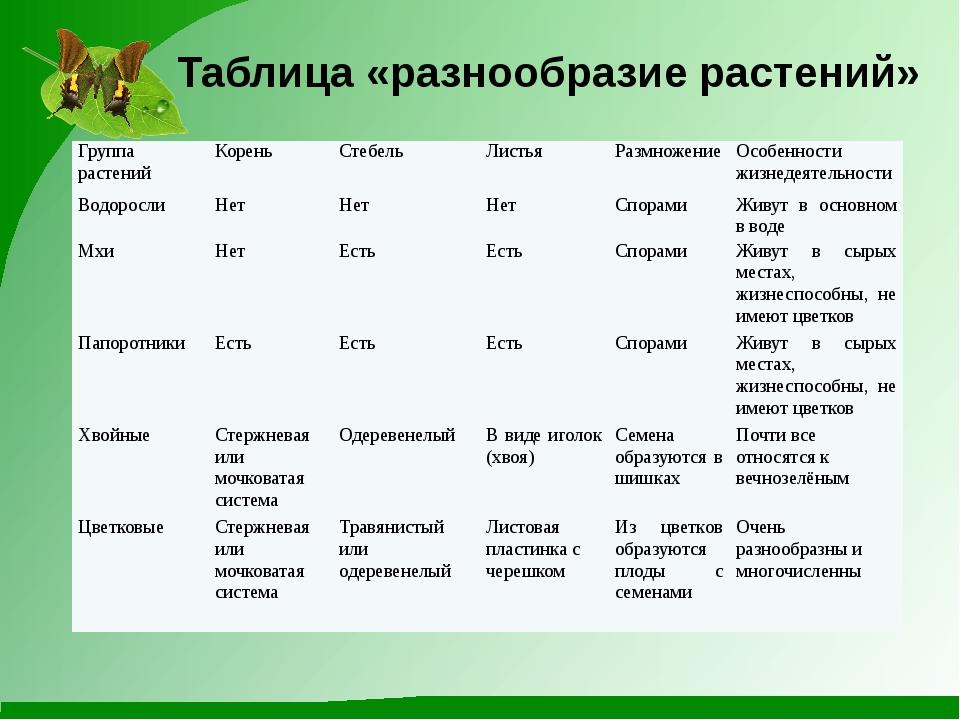 Таблица «разнообразие растений» Группа растений Корень Стебель Листья Размнож...