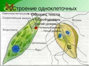 Строение одноклеточных