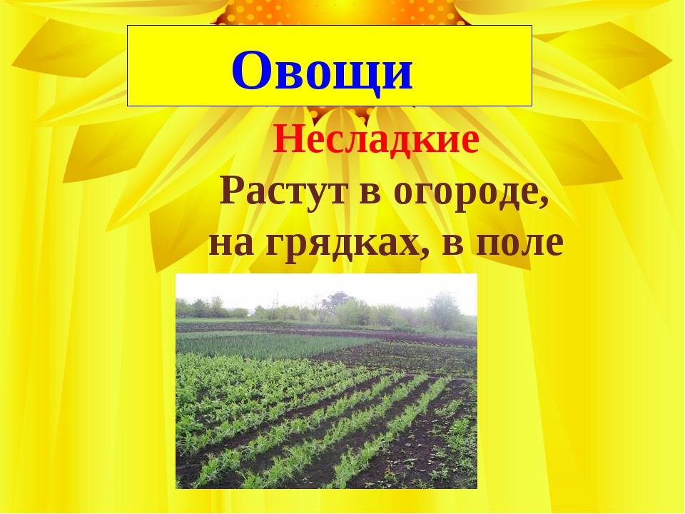 Овощи Несладкие Растут в огороде, на грядках, в поле