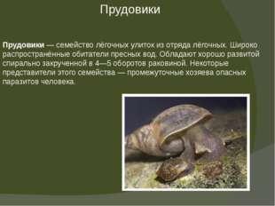 Прудовики— семействолёгочных улитокиз отрядалёгочных.Широко распространё