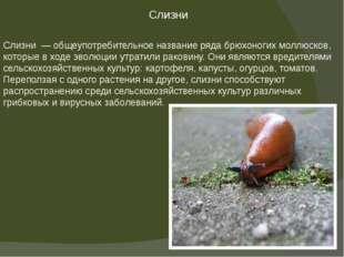 Слизни — общеупотребительное название рядабрюхоногих моллюсков, которые в х