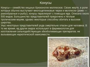 Конусы— семейство хищных брюхоногих моллюсков. Своих жертв, в роли которых об