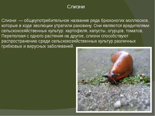 Слизни — общеупотребительное название рядабрюхоногих моллюсков, которые в х...