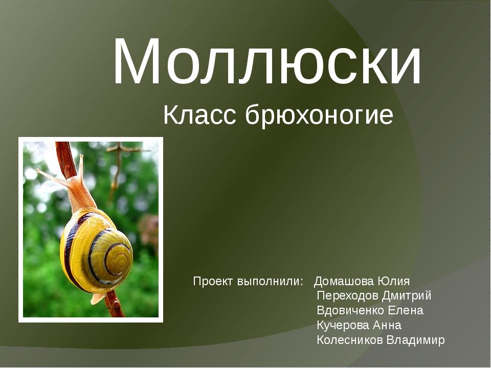 Моллюски Класс брюхоногие Проект выполнили: Домашова Юлия Переходов Дмитрий В...