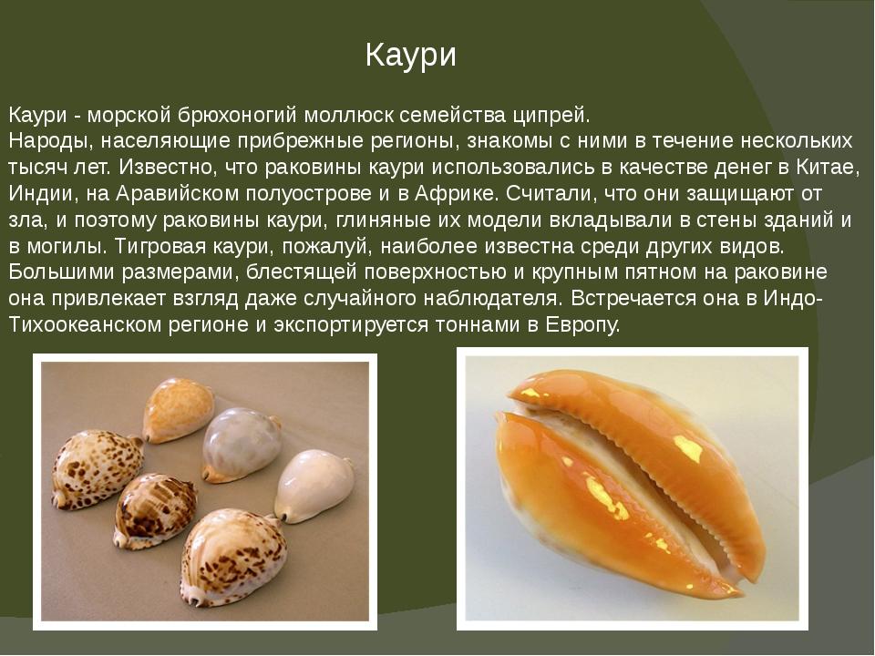 Каури Каури - морской брюхоногий моллюск семейства ципрей. Народы, населяющие...
