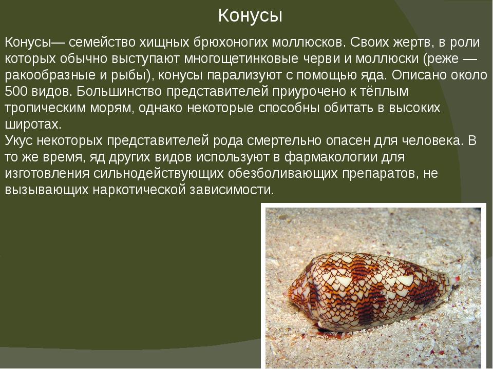 Конусы— семейство хищных брюхоногих моллюсков. Своих жертв, в роли которых об...