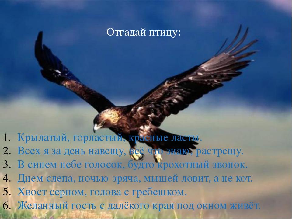 Отгадай птицу: Крылатый, горластый, красные ласты. Всех я за день навещу, вс...