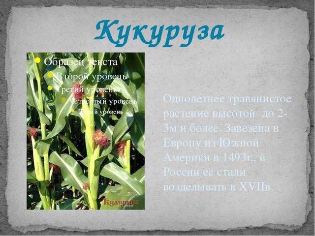Кукуруза Однолетнее травянистое растение высотой до 2-3м и более. Завезена в...