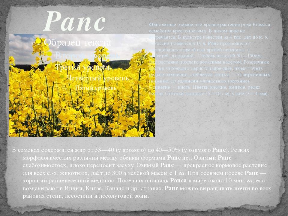Рапс Однолетнее озимое или яровое растение рода Brassica семейства крестоцвет...