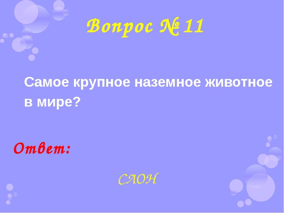 Вопрос № 11 Самое крупное наземное животное в мире? Ответ: СЛОН