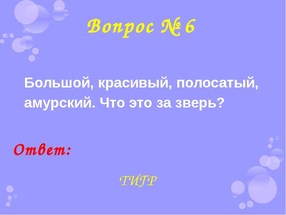 Вопрос № 6 Большой, красивый, полосатый, амурский. Что это за зверь? Ответ: Т...