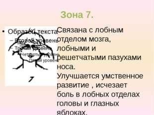 Зона 7. Связана с лобным отделом мозга, лобными и решетчатыми пазухами носа.