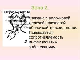 Зона 2. Связана с вилочковой железой, слизистой оболочкой трахеи, глотки. Пов