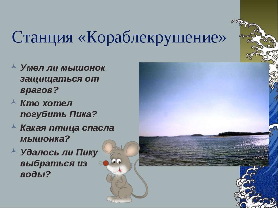 Станция «Кораблекрушение» Умел ли мышонок защищаться от врагов? Кто хотел пог...