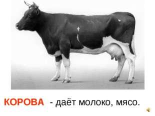КОРОВА - даёт молоко, мясо.