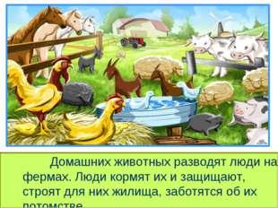 Домашних животных разводят люди на фермах. Люди кормят их и защищают, стр