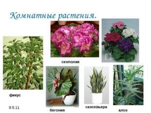 Комнатные растения. фикус сенполия бегония сансевьера алоэ
