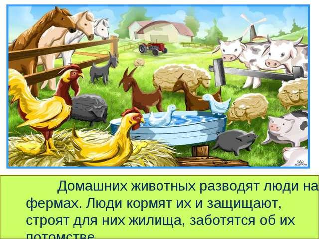 Домашних животных разводят люди на фермах. Люди кормят их и защищают, стр...