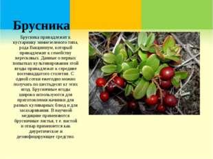 Брусника Брусника принадлежит к кустарнику зимнезеленого типа, рода Вакциниум