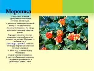 Морошка «Морошка»является одновременно названием растения и его плодов. В др