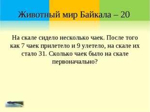 Животный мир Байкала – 20 На скале сидело несколько чаек. После того как 7 ча