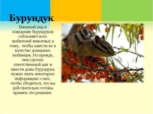 Бурундук Внешний вид и поведение бурундуков соблазняет всех любителей животны