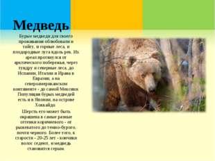 Медведь Бурые медведи для своего проживания облюбовали и тайгу, и горные леса
