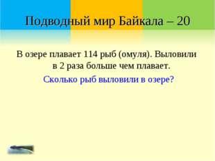 Подводный мир Байкала – 20 В озере плавает 114 рыб (омуля). Выловили в 2 раза