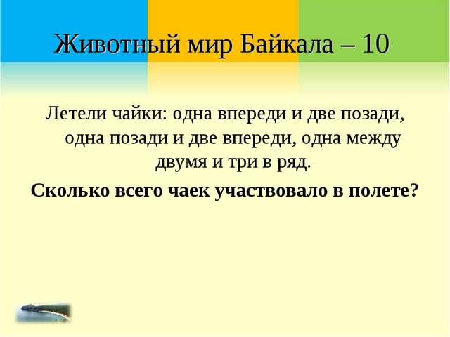 Животный мир Байкала – 10 Летели чайки: одна впереди и две позади, одна позад...