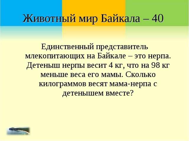 Единственный представитель млекопитающих на Байкале – это нерпа. Детеныш нерп...