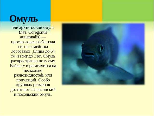 Омуль или арктический омуль (лат. Coregonus autumnalis) — промысловая рыба ро...