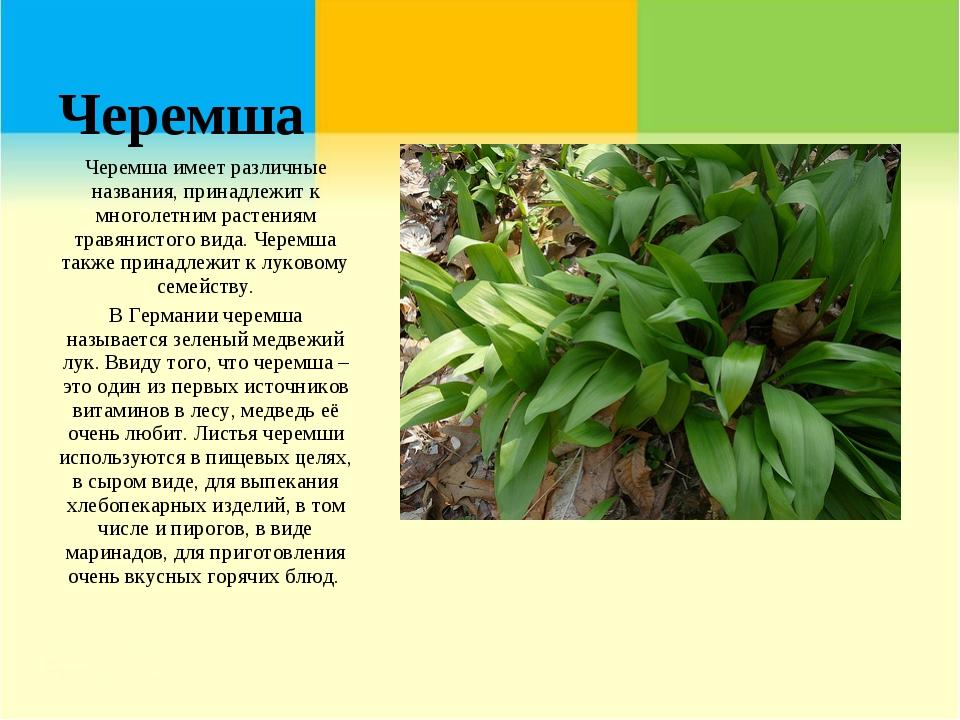 Черемша Черемша имеет различные названия, принадлежит к многолетним растениям...